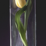 test tube tulip